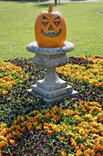 Use pumpkins as accessories in the middle of bold drifts of orange or almost-black flowers. The midsized pansy called Halloween II is virtually black and would make an excellent partner with Pansy Panola Deep Orange.