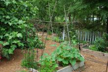 Urban gardens normally are constructed on raised beds and enclosed or separated from lawn areas with wood or rocks to provide proper drainage and aeration. (Photos by Norman Winter)