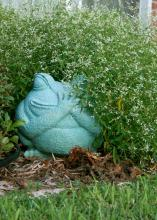 A ceramic frog  looks like it is hiding in a mass of Silver Fog euphorbia.