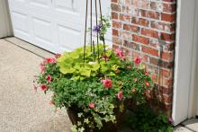 Combination plantings are limited only by your own creativity. This container combines Rio purslane, Bermuda Beach supertunia, light green Sweet Caroline sweet potato and a clematis vine. (Photo by Gary Bachman)