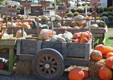 Colorful pumpkin, squash and gourd displays at local garden centers around the state are indications that summer's days are nearing an end. (Photo by MSU Extension Service/Gary Bachman)