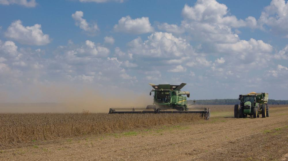 A large, green combine machine plows a soybean field while a green tractor rides beside it.