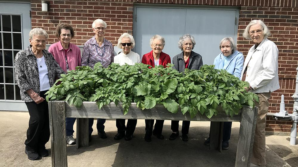 A group of people stand behind a waist-high, elevated raised gardening bed full of green potato foliage.