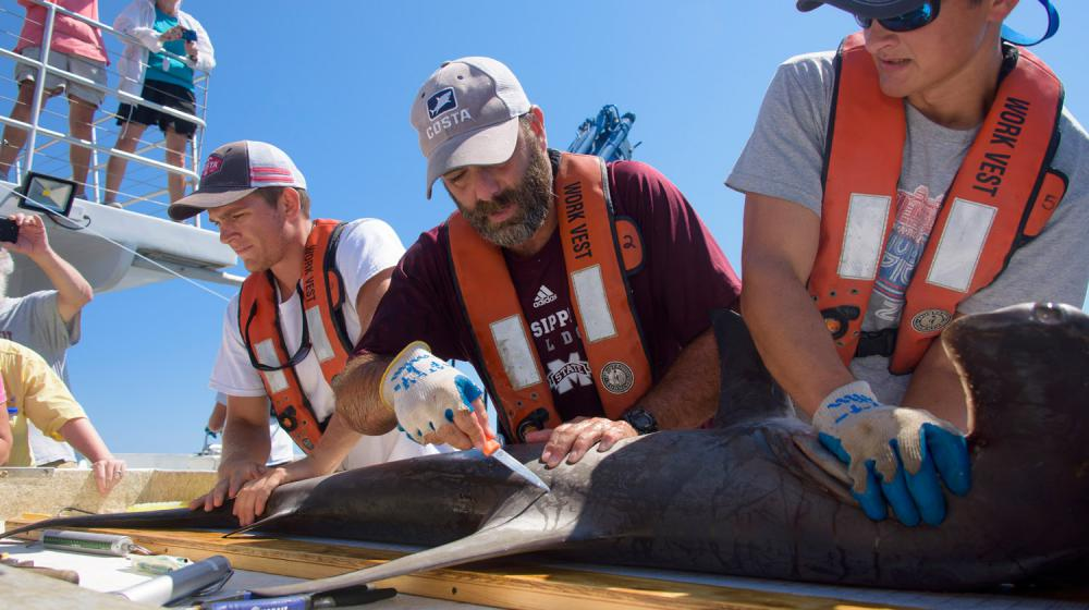 Three men, all wearing orange life vests and baseball caps, hold a shark, and the bearded man in the center prods the animal's side with an orange-handled instrument.