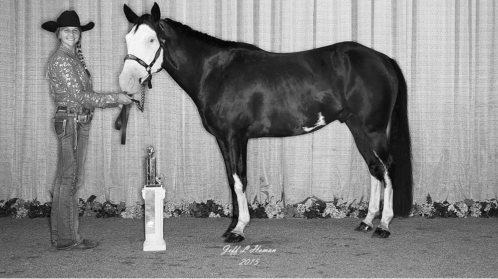 The 2015 Horse Show Champion.