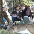 Steve Demarais (left) and Bronson Strickland (right) take measurements of a tranquilized deer housed at Mississippi State University's Rusty Dawkins Memorial Deer Unit.  Center from left, graduate students Erick Michel and Jake Oates record the data to help researchers correlate nutrition and genetics with white-tailed deer antler growth. (Photo by MSU Forest and Wildlife Research Center/Karen Brasher)