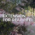 Extension for Real Life header image