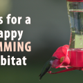 A single hummingbird stands out against a blurred background as it feeds on homemade nectar at a feeder.