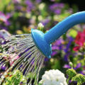 Watering colorful flowers with a blue watering can.