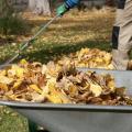 A man raking leaves into a wheelbarrow.