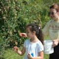 Tina Cox of West Point picks blueberries with her daughter, Anna, 7, at Reese Orchard in Sessums. The pick-your-own method of selling blueberries is increasing in popularity, allowing consumers a fresh product they can choose themselves.
