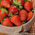 Mississippi strawberry growers began harvesting this popular fruit two weeks earlier than usual because of warmer temperatures statewide. (Photo by Kat Lawrence)