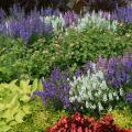 White and purple flower stalks are massed in a bed with a variety of pink flowers and different colors and shapes of green leaves.