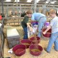 Caleb Mauldin (left) and Cade Mauldin get some help mixing cattle feed from their dad Lance Mauldin at the Mississippi State Fair Oct. 4. Caleb and Cade show beef cattle as members of Jones County 4-H. (Photo by MSU Ag Communications/Susan Collins-Smith)