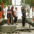 Mississippi State University plant and soil sciences associate professor Guihong Bi, right, shows tomatoes being grown at a Shandong Shouguang Vegetable Industry Group greenhouse to MSU Extension agents, from left, Emily Carter, Lanette Crocker and Lisa Stewart on June 20, 2016. (Photo by MSU Extension Service/Nathan Gregory)