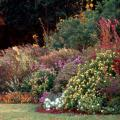 When gardeners discover the harmony that results from using varying colors and textures, what was once considered simply a flower border takes on the look of a real garden.