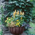 Attract hummingbirds by planting a garden with a long season of overlapping bloom.