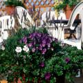 Container gardening can provide colorful displays throughout the fall months. This combination, including purple pansies beneath spikes of lavender, yields a spectacular accent on a backyard deck.