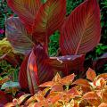 A single color can make impressive displays, even when flowers are not involved. The foliage of these Tropicanna canna and Rustic Orange coleus combines hot colors for a tropical-looking display all summer.