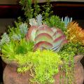 This year's Hot to Trot Pot Competition winner was a large container of different succulents. Seen here, the winner combined everything from large-leafed kalanchoe and blue-green crassulas to lime-colored and orange sedums. (Photo by Norman Winter)
