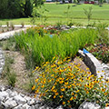 Successful demonstration rain garden at MSU School of Landscape Architecture
