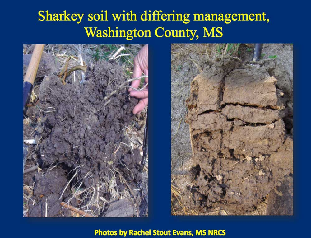 A comparison picture of soil with a lot of roots and another without.