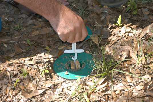 This in-ground termite bait station is being checked for termite activity.