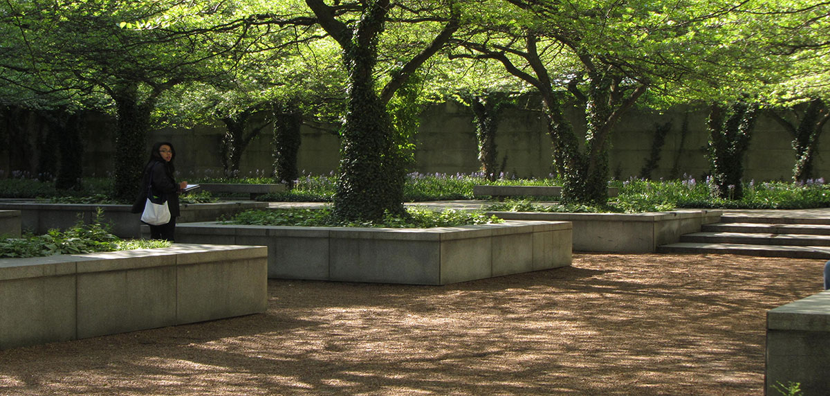 A garden with large trees in concrete square planters.