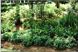 This is an image of a successful shade garden.