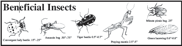 Drawings with beneficial insects listed: lady beetle, assassin bug, tiger beetle, praying mantis, minute pirate bug, and green lacewing.