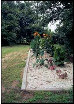 This is an image of a flower garden that uses a greywater system.