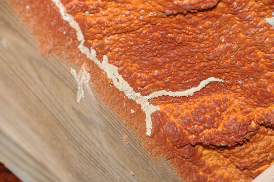 Termites do not eat sprayed-on foam insulation, but they will readily tunnel through it.